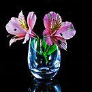 Alstroemeria , Lily of The Incas by Tom Newman