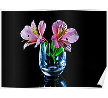 Alstroemeria , Lily of The Incas Poster