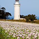 Table Cape Lighthouse - Tasmania by Cathryn O'Donnell