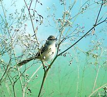 A bird by Dr. Harmeet Singh