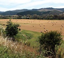 Between Lake Buffalo and Myrtleford Vic by Emmy Silvius