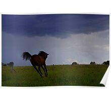 Storm Colt Poster