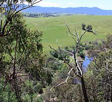 Between Omeo and Bairnsdale Vic by OzNatureshots