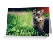 Russian Blue  Greeting Card
