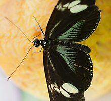 butterffly on fruit by spetenfia