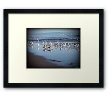 Dancing Sea Gulls Framed Print