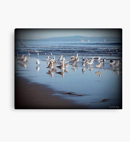 Dancing Sea Gulls Canvas Print