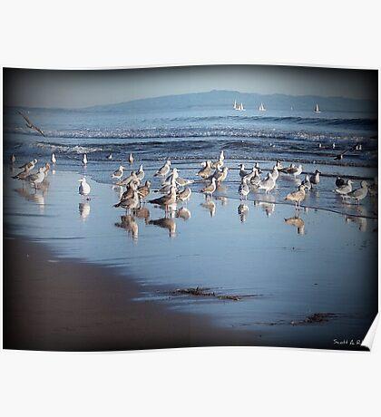 Dancing Sea Gulls Poster