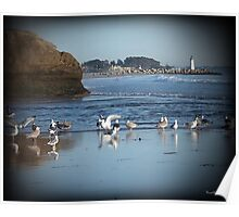 Dancing Sea Gulls 2 Poster