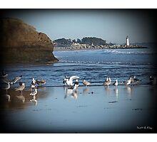 Dancing Sea Gulls 2 Photographic Print