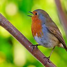 Robin in full song by Andrew Jones