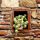 A Plant in the Wall by Rae Tucker
