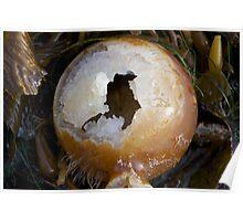 Seaweed Bulb Poster