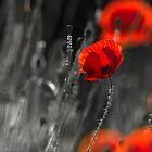 Poppy Revelation by Sarah-fiona Helme
