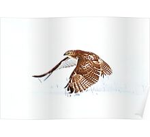 Red-tailed Hawk - Uprising Poster