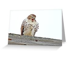 Red-tailed Hawk - Voices his Opinion Greeting Card