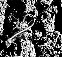 Reptile Noir by glennc70000