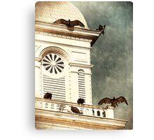 Sunning Vultures Canvas Print