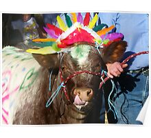 Indian Chief Shorthorn, 2011 Royal Canberra Show Poster