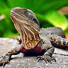 Bearded Water Dragon by tracielouise