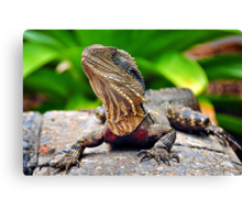 Bearded Water Dragon Canvas Print