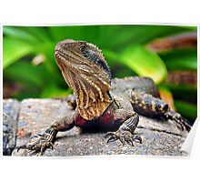 Bearded Water Dragon Poster