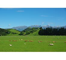 Spring landscape South Island New Zealand Photographic Print