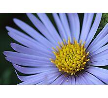 fallen pollen Photographic Print