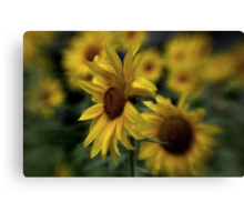 ~ Sunny Side ~ Canvas Print