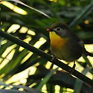 Pretty Little Warbler by Lolabud