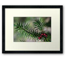 Bush Berry Framed Print