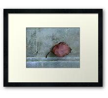 Leaf Portrait #1 Framed Print