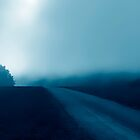 The Road into the Fog..........white Flowers........Black Forest by Imi Koetz