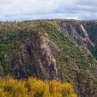 Wollomombi Gorge by Chris  Randall
