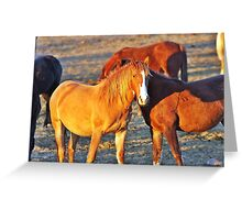 Waiting Horses Greeting Card
