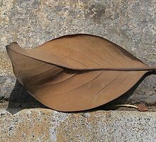 Leaf Portrait #3 by Jane Underwood