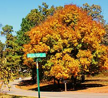 Maple On The Corner by Rick  Friedle