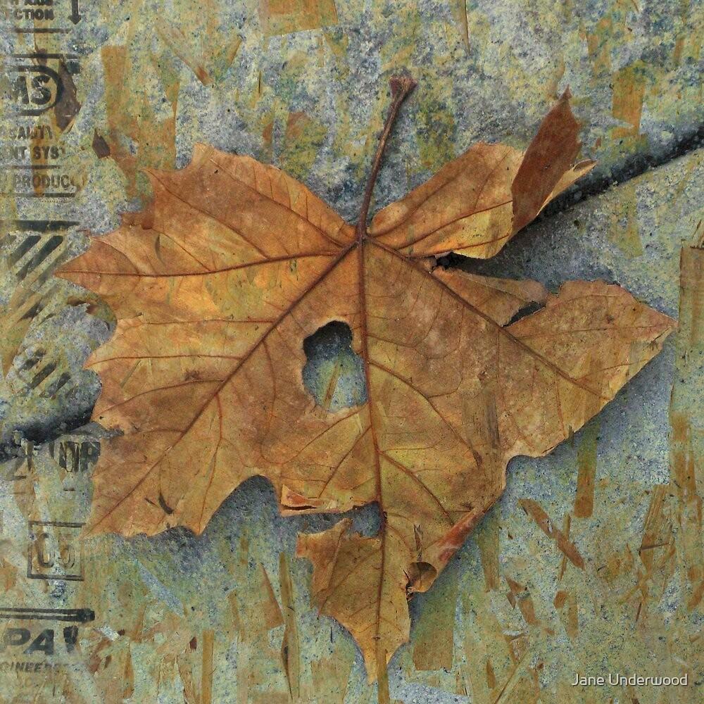 Leaf Portrait #9 by Jane Underwood