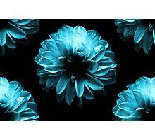 Flowers Blue Photographic Print