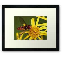 Insect Feeding Framed Print