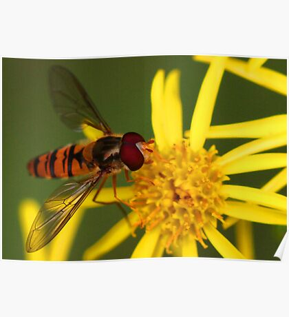 Insect Feeding Poster