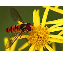 Insect Feeding Photographic Print