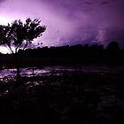 Plum lightning by Penny Kittel