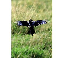 Magpie Crucifix Photographic Print