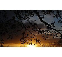 Autumn Tress at Sunset Photographic Print