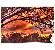sunset through the trees #2 Poster