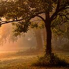 Tree In Mist by Carolyn  Fletcher