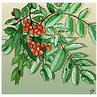 Berries Pencil Sketch by Grant Wilson