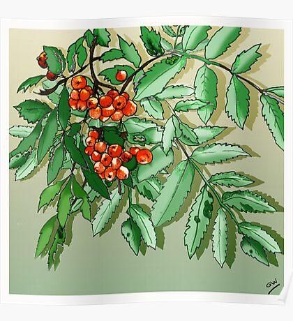 Berries Pencil Sketch Poster