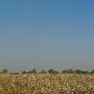 Cotton Field by M-A-K